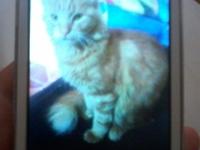 Agustin, mi gato desconocida macho, tiene sangre en orina, orina muy poco, y orina en casa