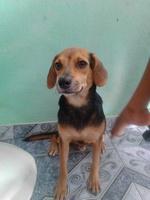 Tobias, mi perro desconocida macho, tiene vómito, mal apetito y diarrea
