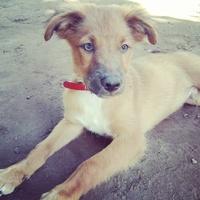 Tengo una duda sobre Kai, mi perro pekinés macho