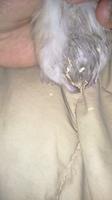 Dificultad al caminar o levantarse en roedores, Hámster