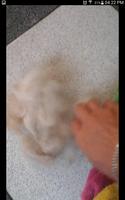 Topito, mi mascota conejo enano de pelo corto macho, tiene estreñimiento