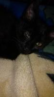Ojos rojos en gatos, Desconocida