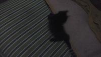 Kevin, mi gato cruce de desconocida y desconocida macho, tiene dificultad al caminar o levantarse, desorientación y inclina la cabeza