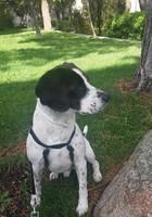 Tengo dudas sobre el comportamiento de Baco, mi perro beagle macho