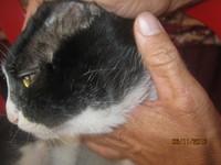 Michiko, mi gato desconocida macho, tiene sed excesiva
