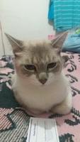 Petrus, mi gato desconocida hembra, tiene sangre en orina, orina demasiado frecuentemente y incontinencia