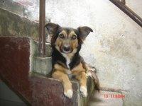 Poly, mi perro desconocida hembra, tiene incontinencia