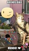 Romeo, mi gato desconocida macho, tiene orina muy poco, dificultad para orinar y sangre en orina