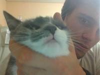 Kimi, mi gato abisinio hembra, tiene heridas y dificultad al tragar