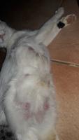 Tengo una duda sobre Mininrringa, mi gato desconocida hembra