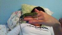 Mal apetito en reptiles, Iguana verde