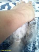 Ceniza, mi gato cruce hembra, tiene sangrado anal, flatulencia y sangre en las heces