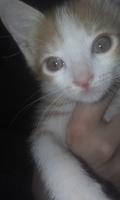 Mono, mi gato desconocida macho, tiene ojos rojos