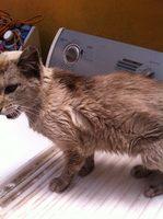 Luka, mi gato cruce hembra, tiene diarrea, mal apetito y vómito con sangre