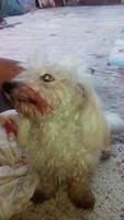 Sangrado de nariz en perros, Desconocida