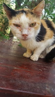 Pupi, mi gato cruce hembra, tiene picor, ojos rojos, y secreción ocular