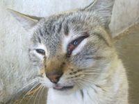 Desorientación en gatos, Desconocida