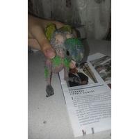 Temblores en aves, Loro amazona frentiazul