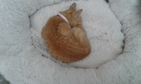 Sangrado anal en gatos, Desconocida