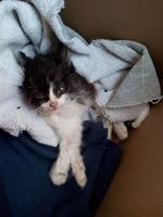 Pichi, mi gato cruce de angora turco hembra, tiene un problema de salud