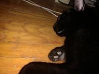 Vómito con sangre en gatos, Desconocida