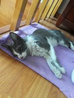 Agresiones en gatos, Desconocida