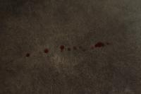 Sangrado en vagina en perros, Desconocida
