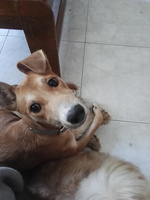 Orina en casa en perros, Desconocida