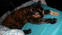 Mordeduras en gatos, Desconocida
