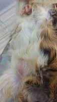 Polly, mi mascota desconocida hembra, tiene diarrea, sangre en las heces y sangrado anal