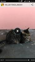 Desmayos en gatos, Desconocida