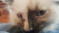 Lucy, mi gato cruce hembra, tiene diarrea y flatulencia