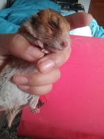 Agresiones en roedores, Desconocida