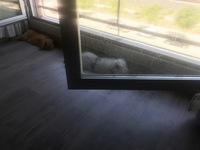 Tysita, mi mascota desconocida hembra, tiene orina muy poco, orina en casa, y sangre en orina