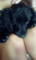 Dificultad para orinar en perros, Desconocida