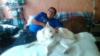 Sangre en orina en perros, Husky siberiano
