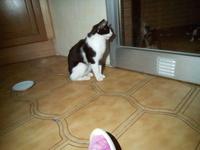 Manchitas, mi gato común europeo hembra, tiene arcadas y respira con dificultad
