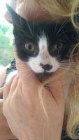 Dora, mi gato europeo de pelo corto hembra, tiene secreción ocular