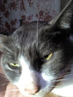 Dificultad para orinar en gatos, Desconocida