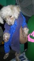 Jadeo en perros, Desconocida