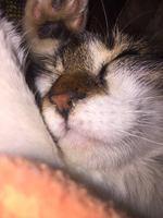 Mucho moco en la nariz en gatos, Desconocida
