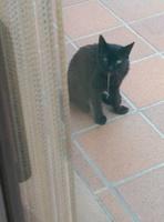 Michi, mi gato desconocida macho, tiene dificultad al masticar