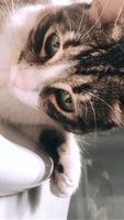 Nacho, mi gato cruce de común europeo macho, tiene dificultad para orinar