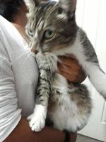 Mingus, mi gato cruce macho, tiene dificultad para orinar