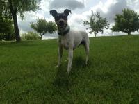 Pucho, mi perro ratonero bodeguero andaluz macho, tiene estornudos y respira con dificultad