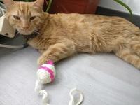 Wichita, mi gato cruce de común europeo macho, tiene mal apetito, gusanos en las heces y mal aliento
