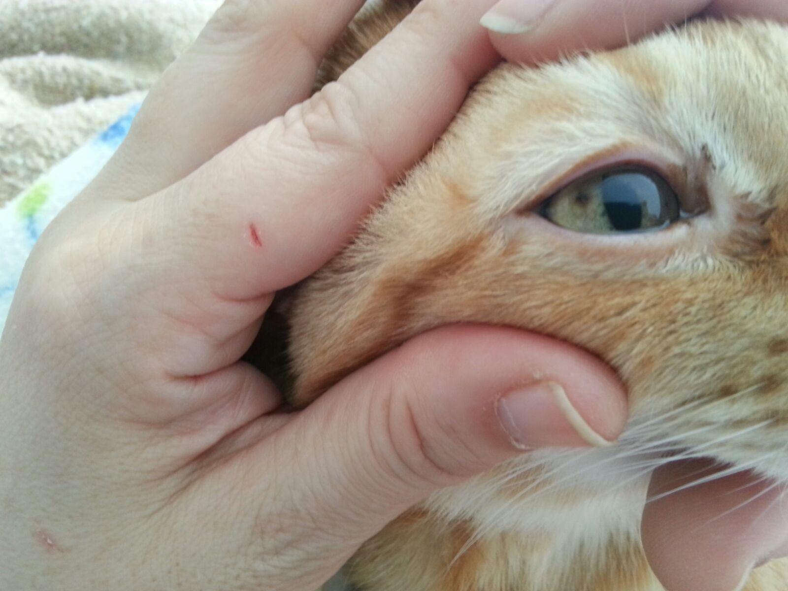 manchas en el ojo de mi gato