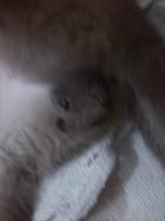 Sangre en orina en gatos, Desconocida