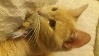 Rufina, mi gato desconocida hembra, tiene secreción ocular