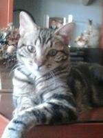 Flatulencia en gatos, Desconocida